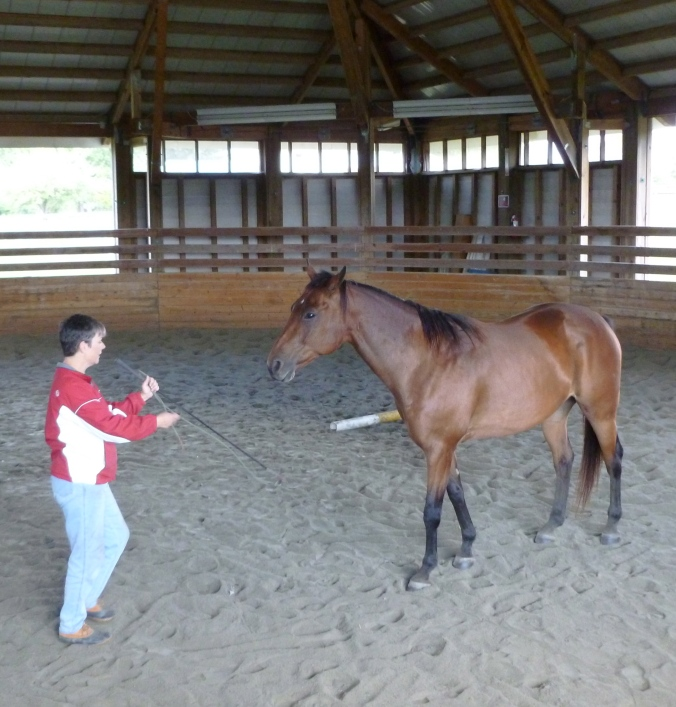 Early days practicing freedom in the round pen