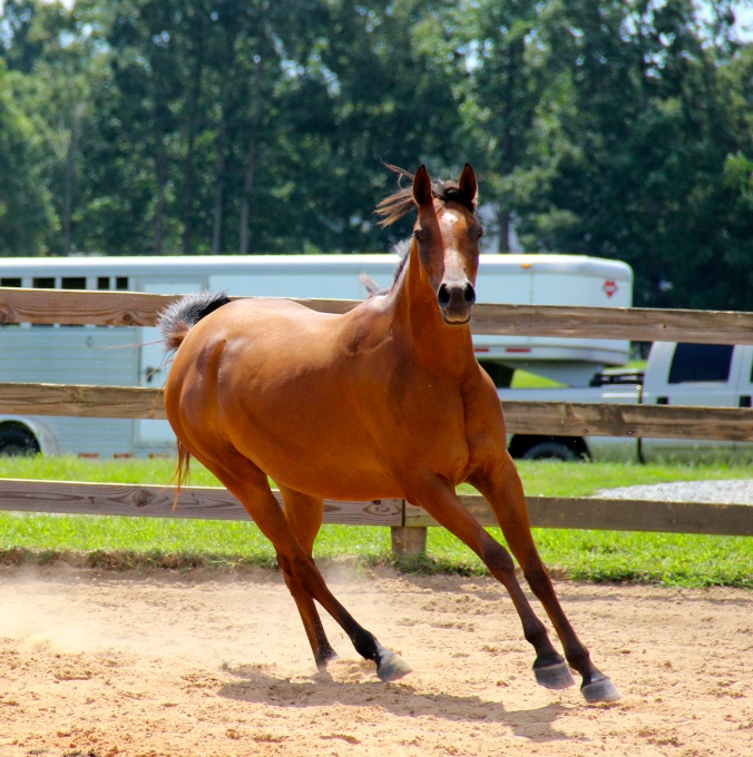 Breezing around the arena